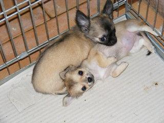 I cuccioli a 12 settimane