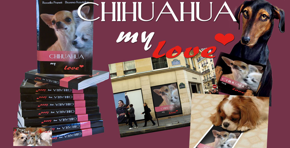 Chihuahua My Love2