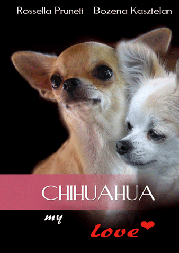 chihuahuamylove