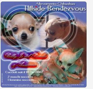 cuccio-galleryL
